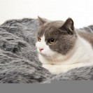 BEAN BAG for a DOG and CAT